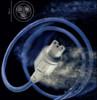 Cablu Isotek EVO3 Premier, 1.5m