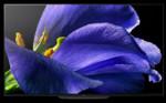 TV Sony Televizor OLED Smart Android Sony 4K 65AG9