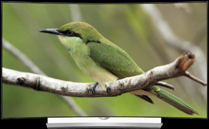 TV LG 65EG960V