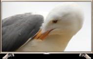 Televizoare TV LG 42LF561VTV LG 42LF561V