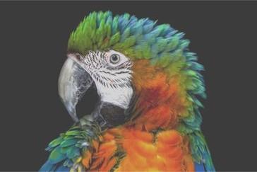 Detaliu al papagalului pe televizorul LCD tip margine