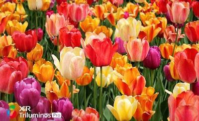 Detalii ale florilor, arătând nuanțe subtile la nivelul petalelor